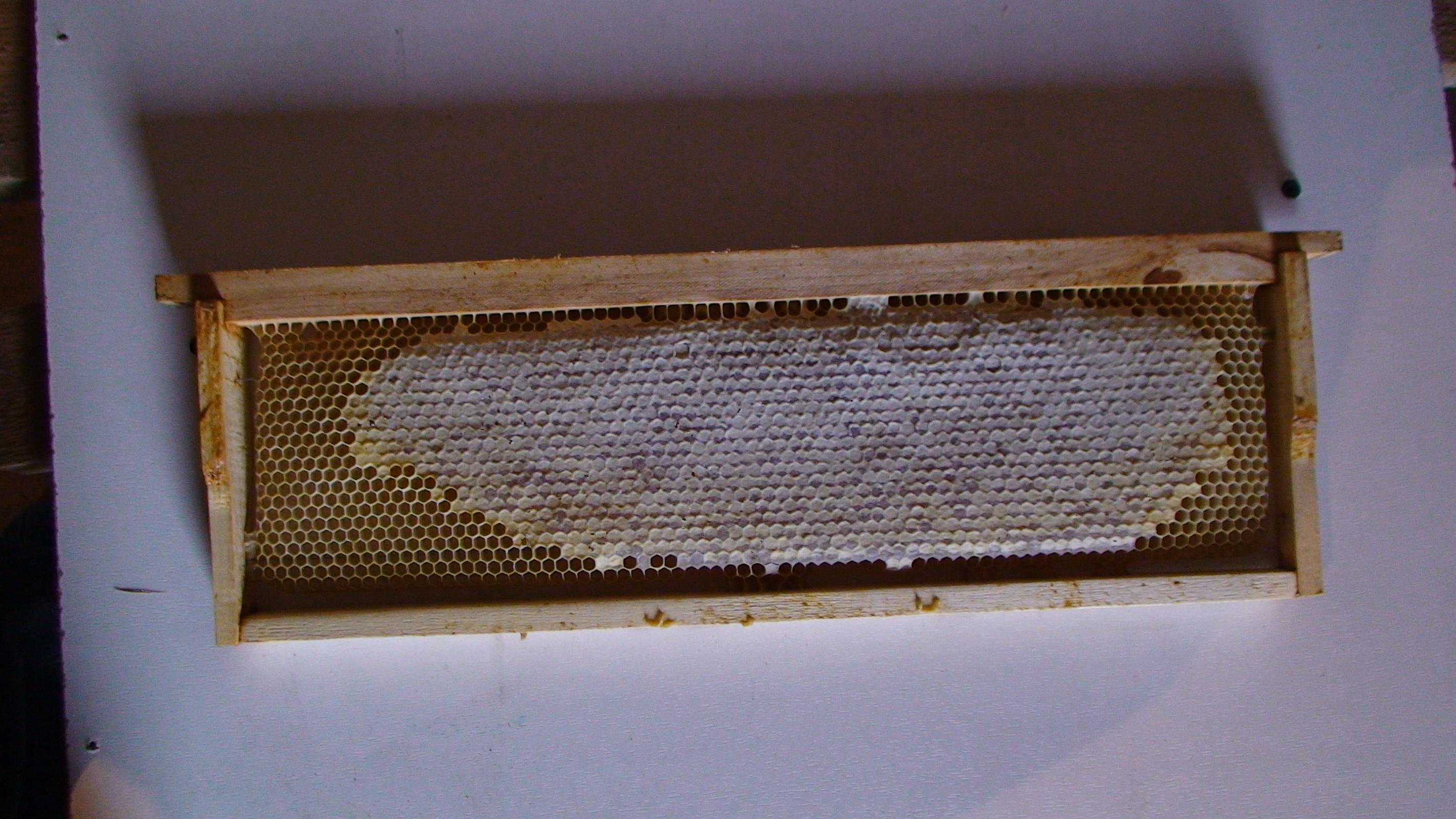 Купить мед в сотах у пасечника в Москве.