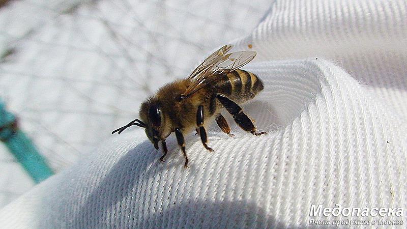 сезон пчеловодства 2017