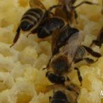 Купить мед диких пчел в Москве